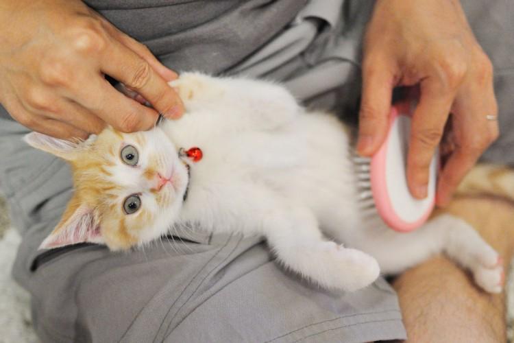 Gato con corte de pelo